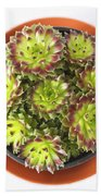 Houseleek Beach Towel