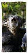 Howling Chimpanzee Beach Towel
