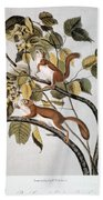 Hudsons Bay Squirrel Beach Towel