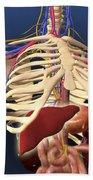 Human Skeleton Showing Digestive System Beach Towel