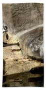 Humboldt Penguin 1 Beach Towel