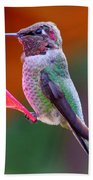 Hummingbird - 28 Beach Towel