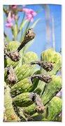 Hummingbird And The Saguaro  Beach Towel