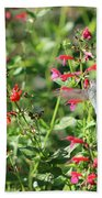 Hummingbird Drinking From Red Trumpet Vine Beach Towel