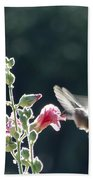 Hummingbird Drinking Pink Hollyhock Photography Beach Towel