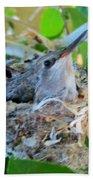 Hummingbird In Nest 1 Beach Towel