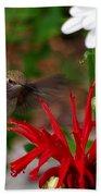 Hummingbird Mid Flight Beach Sheet