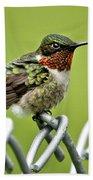 Hummingbird On A Fence Beach Sheet