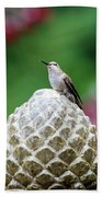 Hummingbird On Garden Water Fountain Beach Towel