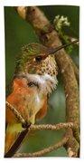 Hummingbird With An Itch Beach Towel