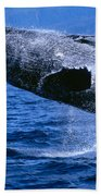 Humpback Full Breach Beach Towel