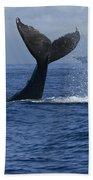 Humpback Whale Tail Lobbing Near Cruise Beach Towel by Flip Nicklin