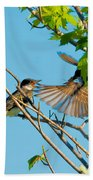 Hungry Birds In Tree Close-up Beach Towel