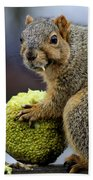 Hungry Squirrel 1 Beach Towel