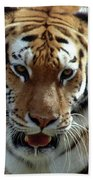 Hungry Tiger Beach Towel