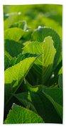 Hydrangea Foliage Beach Towel by Gaspar Avila