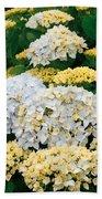 Hydrangeas Blooming Beach Towel