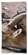 Ibex Mother And Son Beach Towel