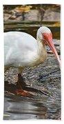 Ibis At Corkscrew Swamp Beach Towel