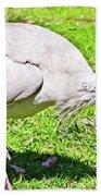 Ibis Looking For Food Beach Towel