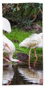 Ibis Reflections Beach Towel