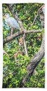 Ibises In A Tree Beach Towel
