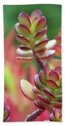 California Red Tip Crassula Ovata Jade Plant Beach Towel