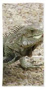 Iguana Eating Lettuce With His Tongue Sticking Out Beach Towel