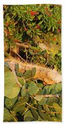 Iguanas Beach Towel