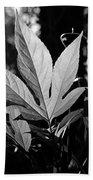 Illuminated Leaf, Black And White Beach Towel