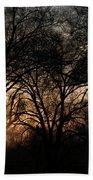 Illuminating Through Trees  Beach Towel