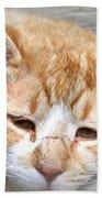 Img_0001 Cat Beach Towel