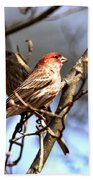 Img_0001 - House Finch Beach Towel