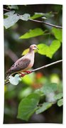 Img_0534-001 - Mourning Dove Beach Towel