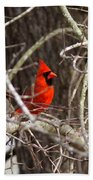 Img_0806 - Northern Cardinal Beach Towel