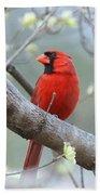 Img_0999-001 - Northern Cardinal Beach Towel