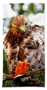 Img_1050-002 - Red-tailed Hawk Beach Towel