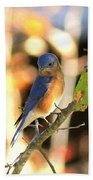 Img_145-005 - Eastern Bluebird Beach Towel