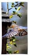 Img_1753-001 - Eastern Bluebird Beach Towel