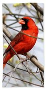 Img_2902-004 - Northern Cardinal Beach Sheet
