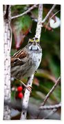 Img_6624-002 - White-throated Sparrow Beach Towel