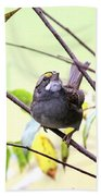 Img_7541-002 - White-throated Sparrow Beach Towel