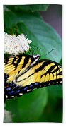 Img_8712-001 - Swallowtail Butterfly Beach Towel