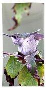 Img_9114-003 - Ruby-throated Hummingbird Beach Towel