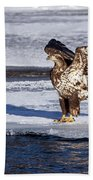 Immature Eagle On Ice Beach Towel
