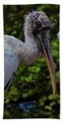 Immature Wood Stork Beach Towel