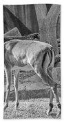 Impala    Black And White Beach Towel