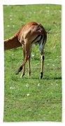 Impala Buck Beach Sheet