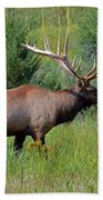 Imperial Bull Elk Beach Towel