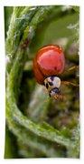 Imposter Ladybug Beach Towel